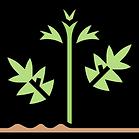 Why the hemp industry?
