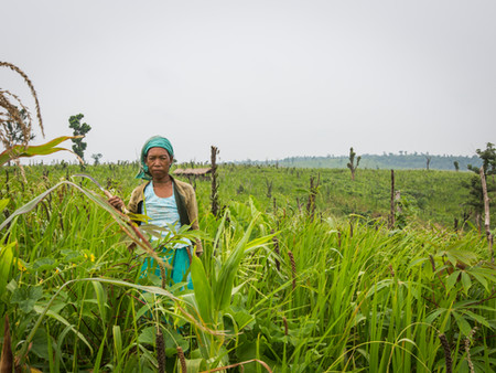 Advancing Equitable Livelihoods for Food Systems Workers