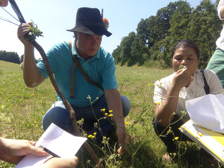 Day 6 in Rome: Fellows identify around 12 wild edible plants during an ABD walk