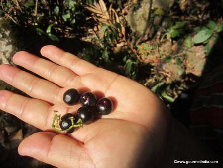Indigenous Terra Madre 2015 Shillong – News & Media: Gourmet food & wine – Gou