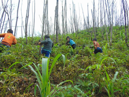 Shifting Cultivation Network