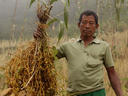 Lessons on food security from Nagaland amid COVID-19