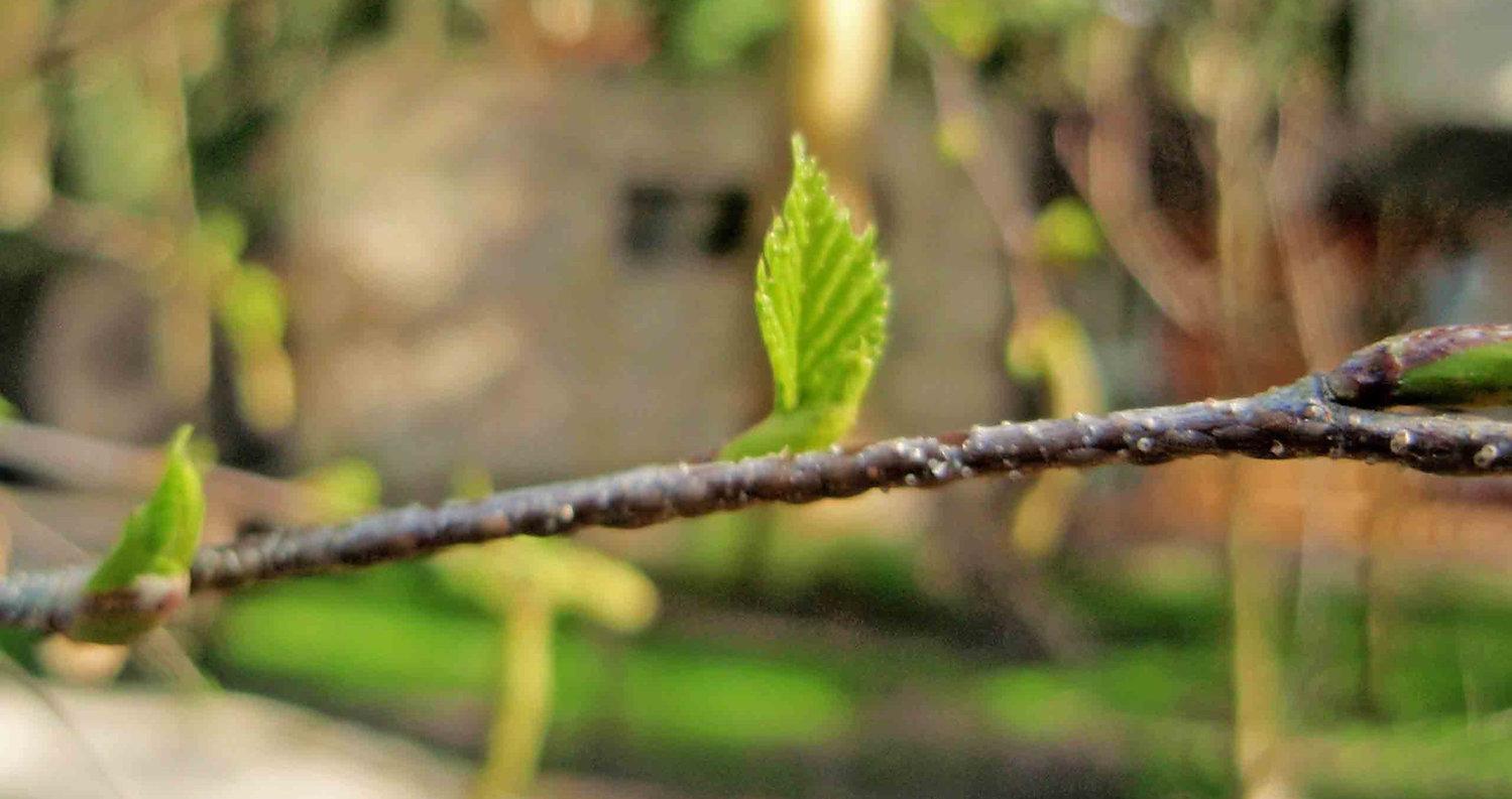 hoja primavera2_edited.jpg