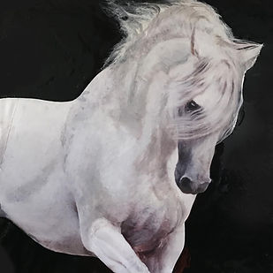 white horse, caballo bianco