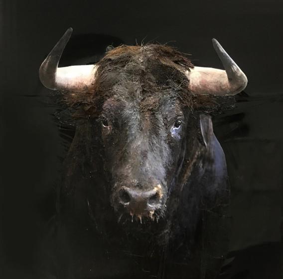 El Toro 90/90 cm