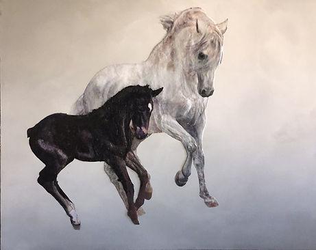 étalon et poulain, stallion, foal