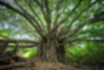 brandon-green-321795.jpg