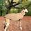 Thumbnail: Cappottino Pet