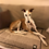 Thumbnail: Copertina Lana Italia Pet 2021