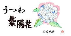 宝塚の器屋うつわ紫陽花