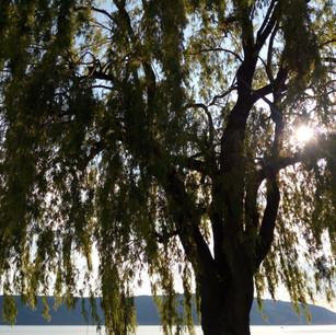 Sonne durch Baum.jpg