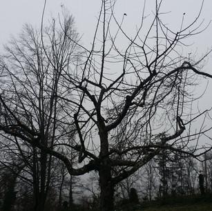 Obstbaumschnitt.jpg