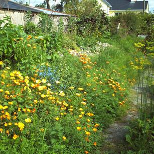 PK-Garten in Irland2.jpg
