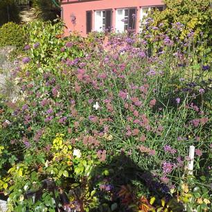 Rosenbeet mit Wildblumen.jpg