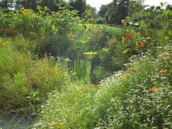 PK-Garten in Irland3.jpg