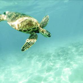 Bescherm niet alleen je huid, maar ook de koralen en dieren in de zee.