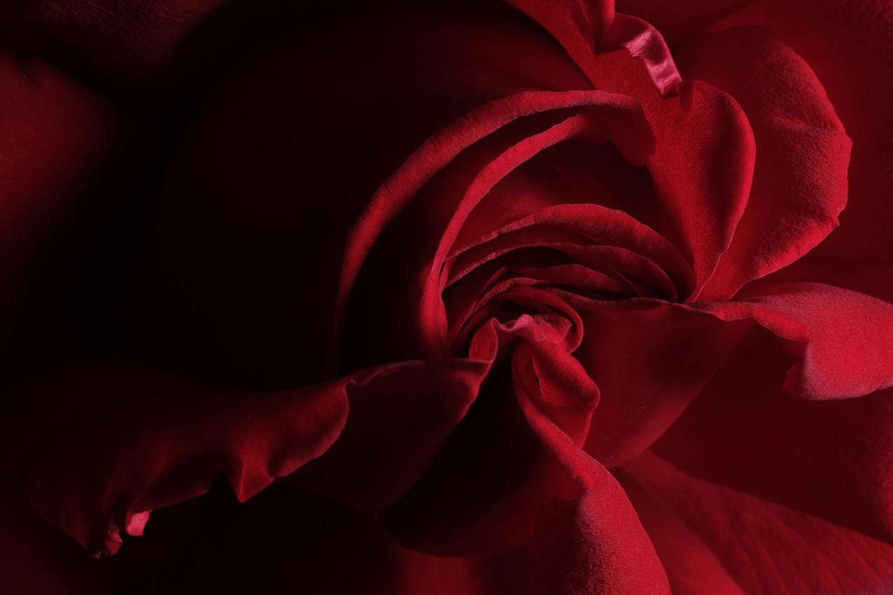 2019_06_Rose Rouge Fond Noir_03_wix.jpg
