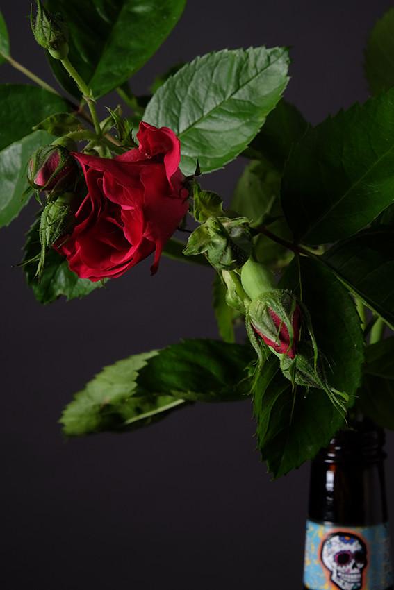 Rose Rouge_Tete de Mort_02_web.jpg