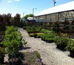 Landscaping_mowing_mulch_gardencenter_trees.jpg