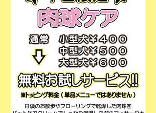 2月のキャンペーン 肉球ケア