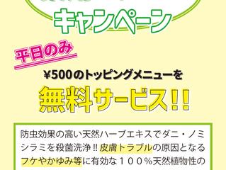 5月6月薬用シャンプーキャンペーン