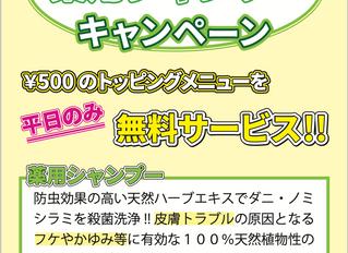 9月限定薬用シャンプーキャンペーン