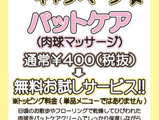 8月平日限定キャンペーン 肉球マッサージ