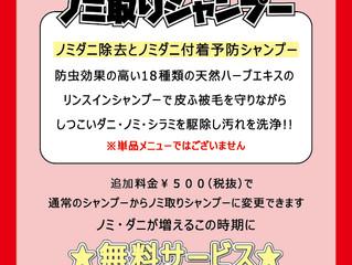 6月キャンペーン ノミ取りシャンプー