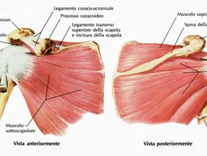 Sport e infortuni: le lesioni della spalla