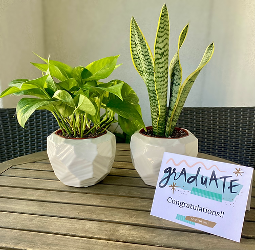 Gift Set - Two 4 inch Plants