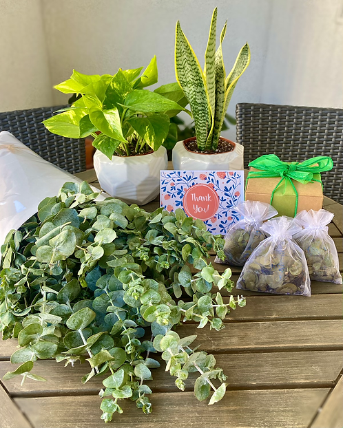 Gift Set- Two 4 inch plants, eucalyptus bundle & scented sachets