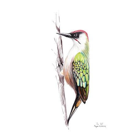 oiseaux_format_carré11.jpg