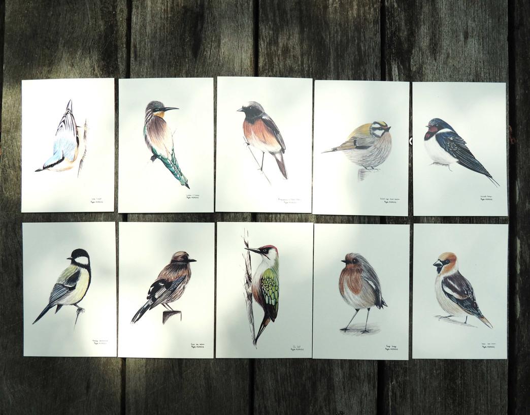 OISEAUX_Cartes postales_BD.jpg
