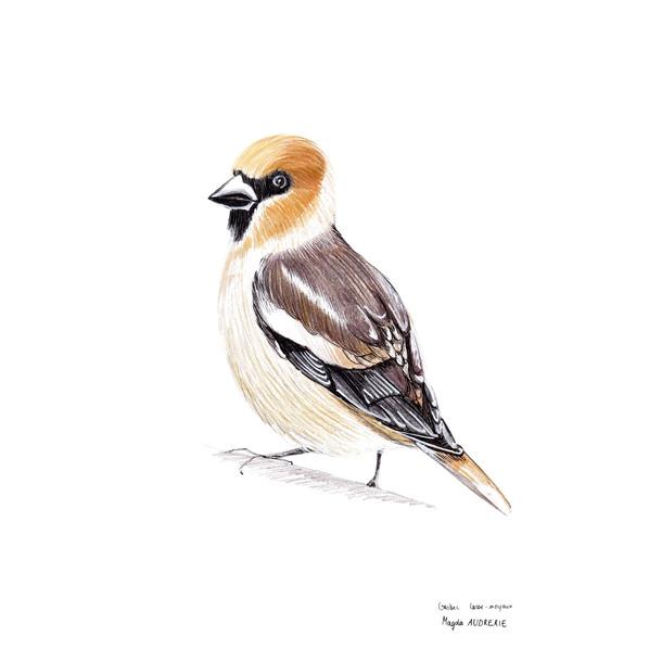 oiseaux_format_carré1.jpg