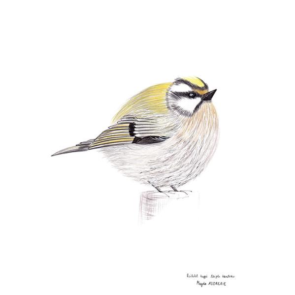 oiseaux_format_carré6.jpg