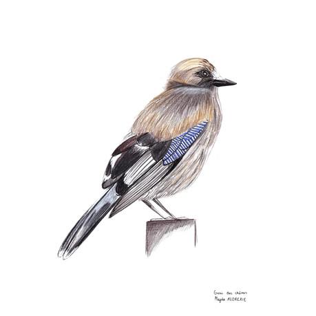 oiseaux_format_carré10.jpg