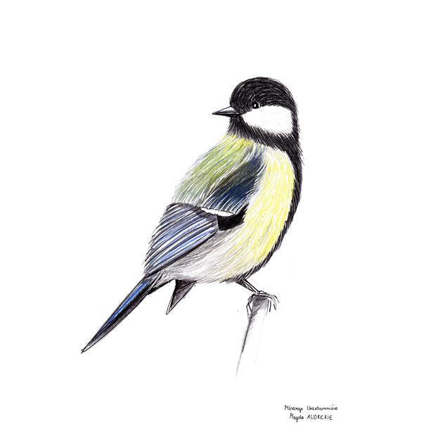 oiseaux_format_carré12.jpg