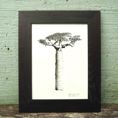 Valérie ROCHE_Baobab (1)_BD.jpg