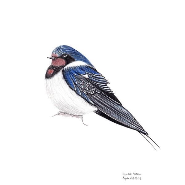 oiseaux_format_carré3.jpg