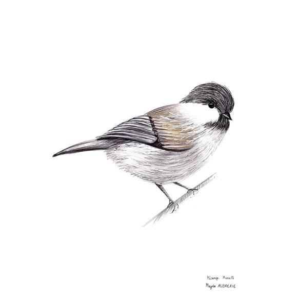 oiseaux_format_carré4.jpg