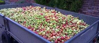 2015 Apple harvest brockhampton credit N