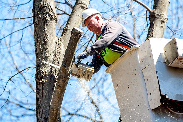 highlander tree service