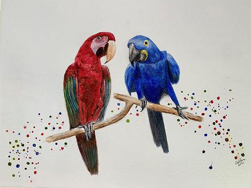 Adler - Party Parrots