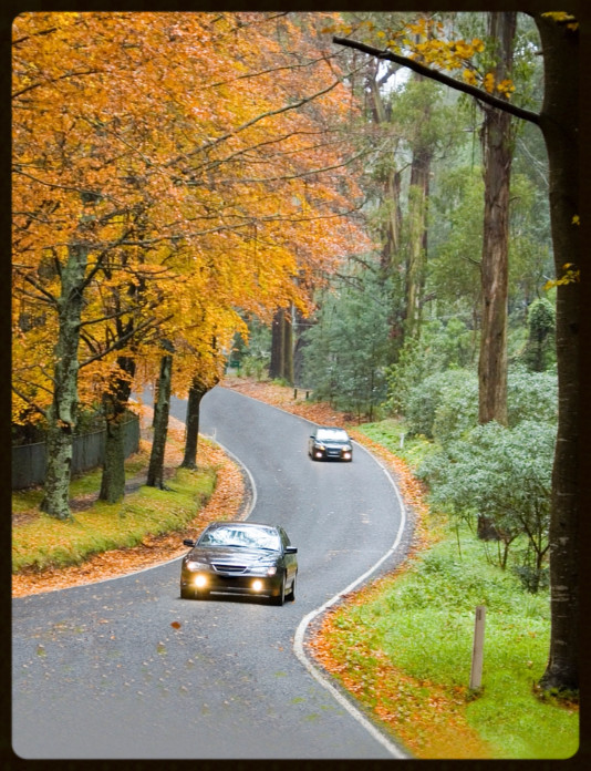 Fall Leaves with Car and Winding Road