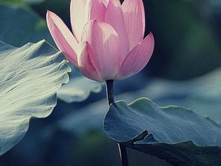 Love Affirmation - YOU DESERVE - Day 1