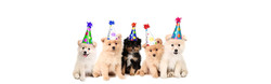 Fiesta de Mascotas