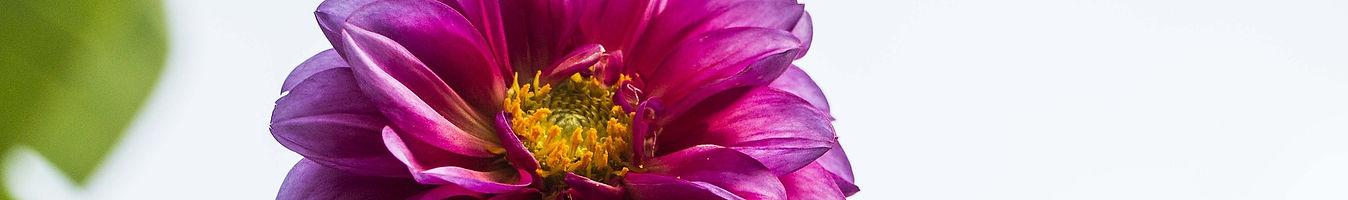 flower-4773230_1920.jpg