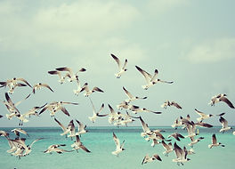 seagulls-815304_1920.jpg