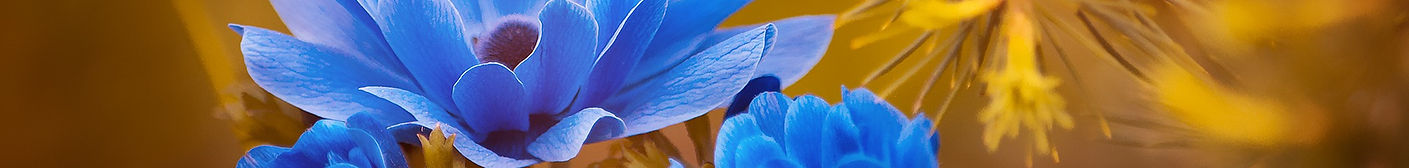 anemone-2396299_1920.jpg