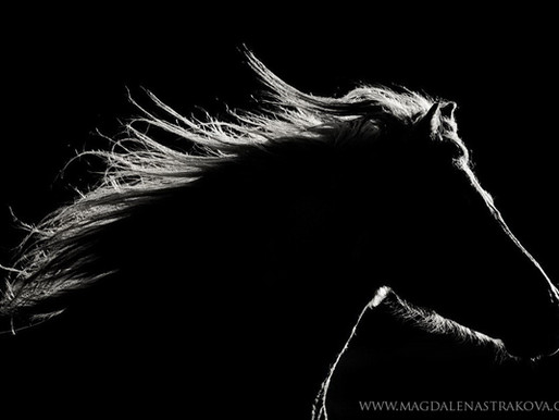 Czech photographer Magdalena's passion for horses